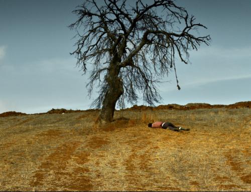 Nuri Bilge Ceylan yeni filmi Ahlat Ağacı